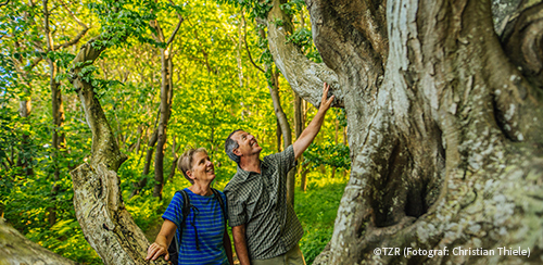 Wandern auf Rügen ©TZR (Fotograf: Christian Thiele)
